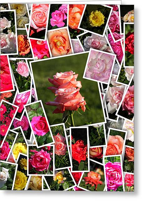 Medium Pink Greeting Cards - Roses Collage Greeting Card by Stefano Senise