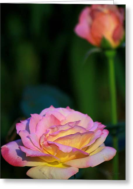 Roses Greeting Card by Deborah  Crew-Johnson