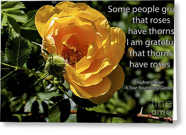 Althea Photographs Greeting Cards - Roses Have Thorns Greeting Card by Janice Rae Pariza