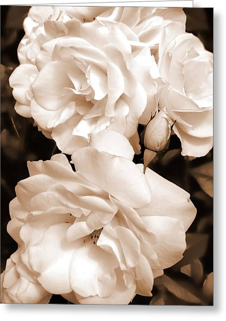 Sepia Flowers Greeting Cards - Roses in Sepia Monochrome Greeting Card by Jennie Marie Schell