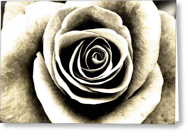 Fresh Greeting Cards - Roses Greeting Card by Jacqui Martin
