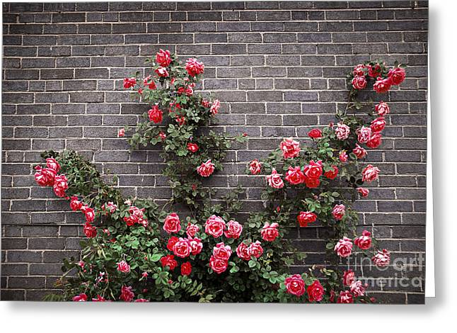 Roses On Brick Wall Greeting Card by Elena Elisseeva