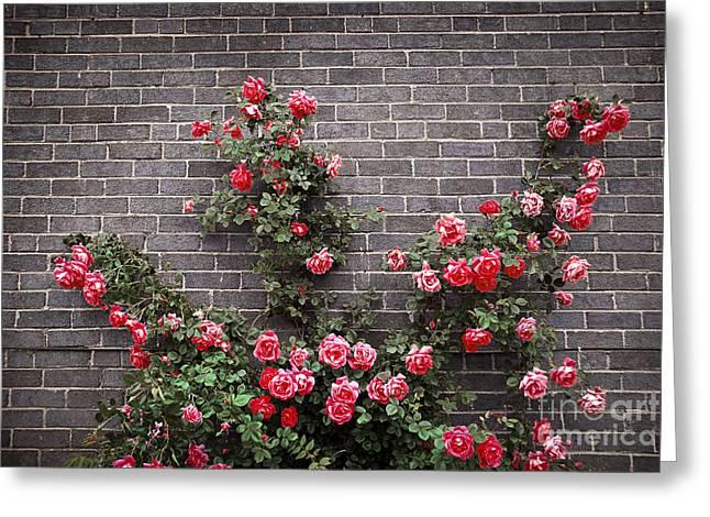 Roses on brick wall Greeting Card by Elena Elisseeva