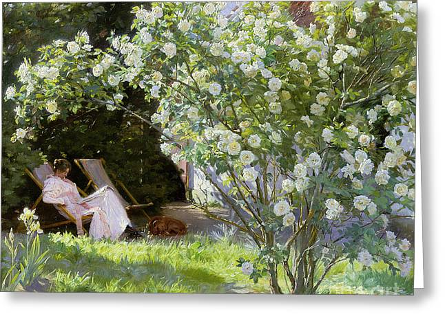 In Bloom Paintings Greeting Cards - Roses Greeting Card by Peder Severin Kroyer