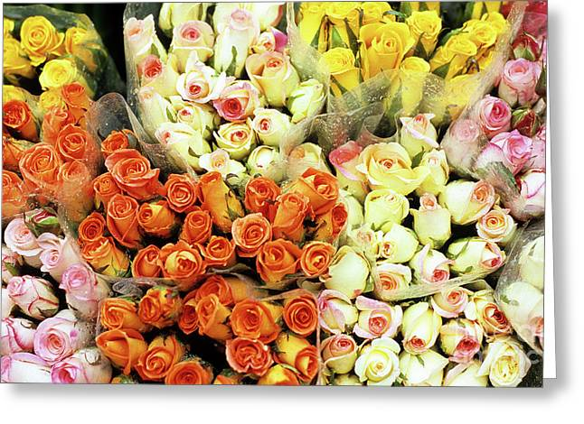 Apricot Greeting Cards - Roses 01 Greeting Card by Rick Piper Photography