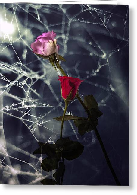 Spider Web Greeting Cards - Roses With Coweb Greeting Card by Joana Kruse