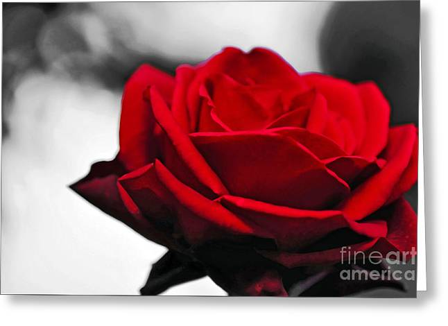 Rose Petals Greeting Cards - Rosey Red Greeting Card by Kaye Menner