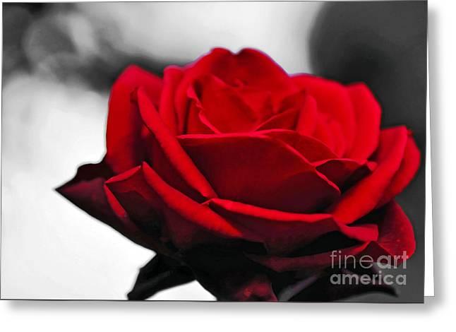 Rose Petals Greeting Cards - Rosey Red Greeting Card by Kaye Menner