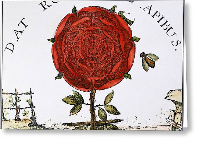Fludd Greeting Cards - Rosicrucian Symbol Greeting Card by Granger