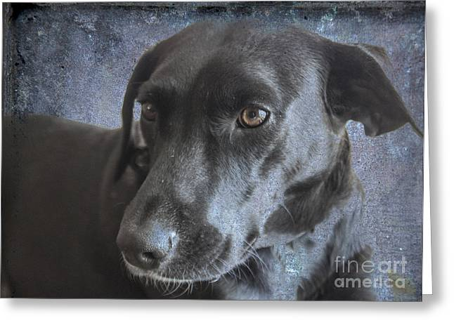 Chocolate Lab Greeting Cards - Rosie Sweet Labrador Greeting Card by Janice Rae Pariza