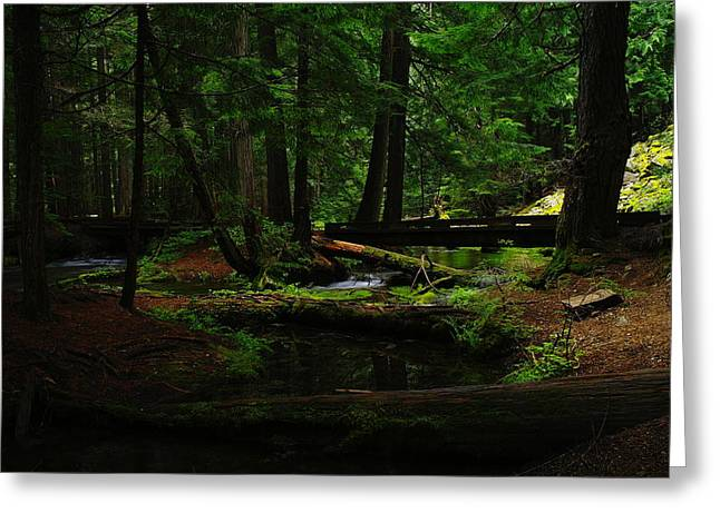 Pine Needles Greeting Cards - Ross Creek Montana Greeting Card by Jeff  Swan