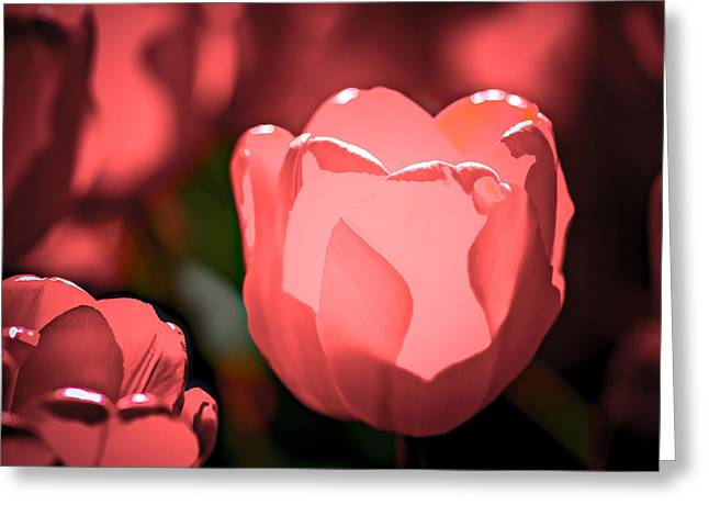 Red Cheeks Greeting Cards - Rosy Cheeks Greeting Card by Alexander Senin
