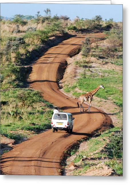Geobob Greeting Cards - Rothschild Giraffe and Dirt Road Murchison Falls National Park Uganda Africa Greeting Card by Robert Ford