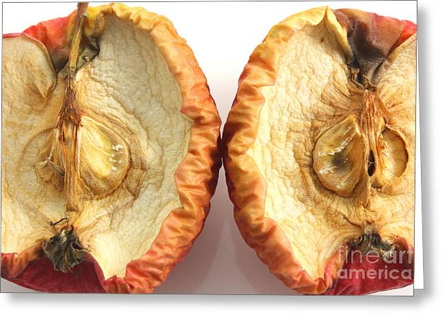 Mouldy Greeting Cards - Rotten apple halves Greeting Card by Simon Bratt Photography LRPS