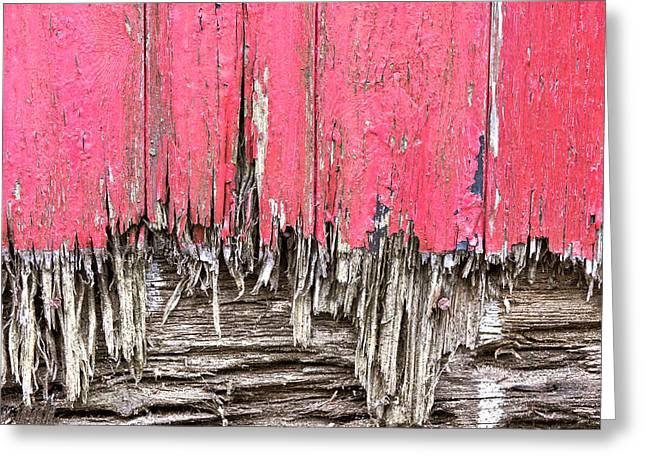 Scruffy Greeting Cards - Rotten wood Greeting Card by Tom Gowanlock