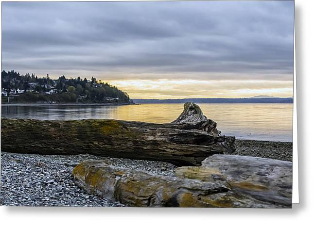 Puget Sound Greeting Cards - Rotting Away Greeting Card by Michael DeMello