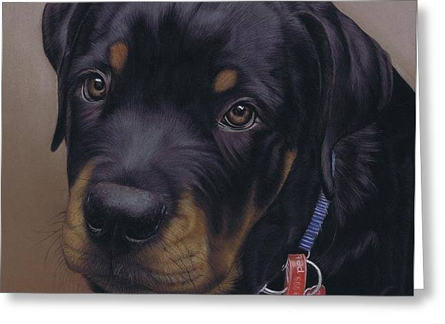 Rottweiler Dog Greeting Card by Karie-Ann Cooper
