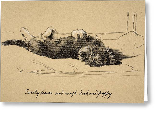 Puppies Drawings Greeting Cards - Rough Daschund Puppy Detail, 1930 Greeting Card by Cecil Charles Windsor Aldin