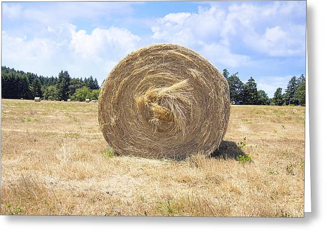 Fed Greeting Cards - Round Bales of Hay Closeup Greeting Card by JPLDesigns