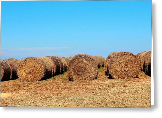 Haybale Digital Art Greeting Cards - Round Bales Of Hay Greeting Card by Cynthia Guinn