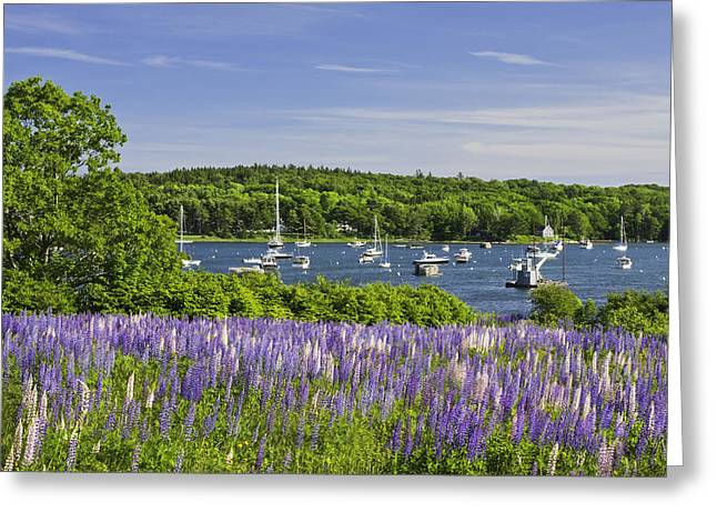 Blue Sailboat Greeting Cards - Round Pond Lupine Flowers on The Coast Of Maine Greeting Card by Keith Webber Jr