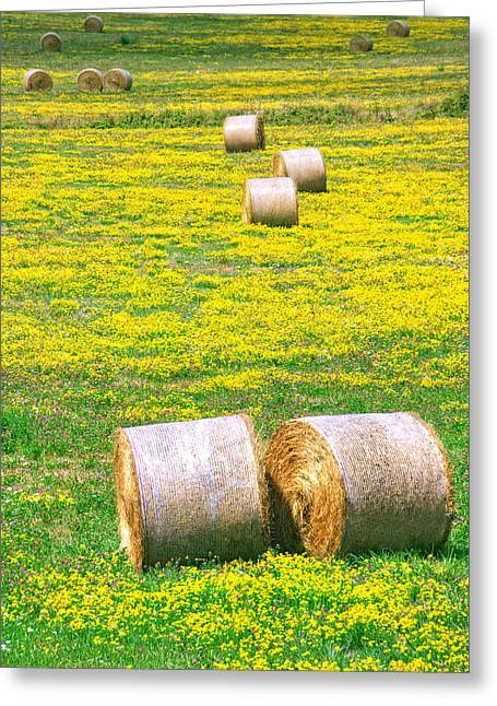 Bale Greeting Cards - Rounded Hay Bales On Grass Greeting Card by Mikel Martinez de Osaba