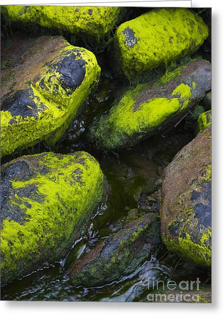 Moss Green Greeting Cards - Rounded Rocks Greeting Card by Tim Grams
