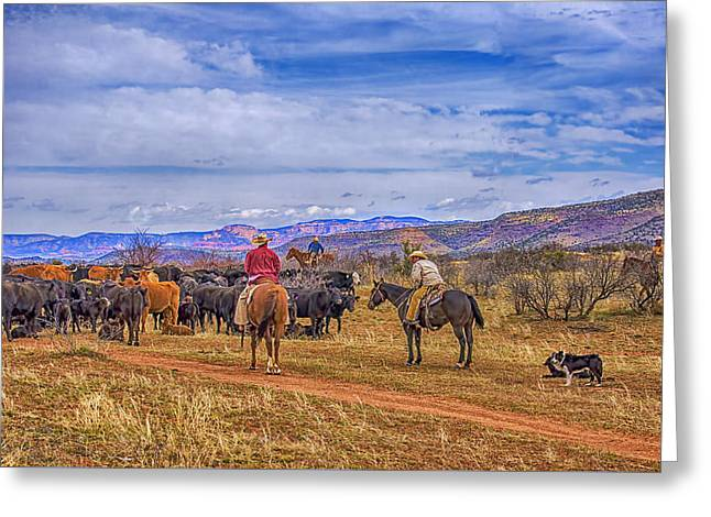 Working Dog Greeting Cards - Rounding Up Cattle In Cornville Arizona Greeting Card by Priscilla Burgers