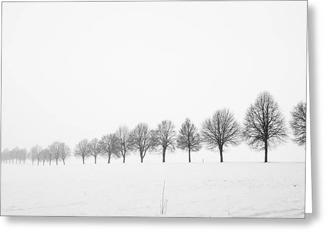 Peaceful Scene Greeting Cards - Row of bare trees in minimal winter landscape Greeting Card by Matthias Hauser