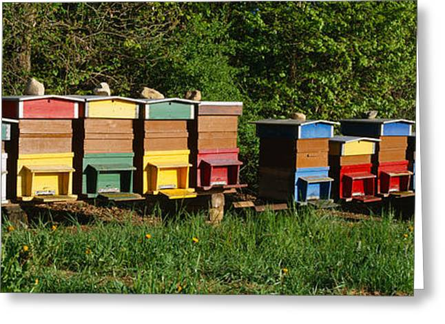 Beekeeping Greeting Cards - Row Of Beehives, Switzerland Greeting Card by Panoramic Images