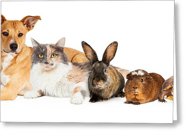 White. Rabbit Greeting Cards - Row of Domestic Pets Greeting Card by Susan  Schmitz