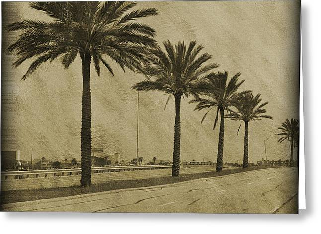 Bokhe Greeting Cards - Row of Palms Greeting Card by Malania Hammer