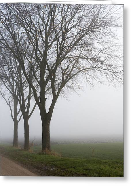 Dutch Greeting Cards - Row of trees in a misty landscape Greeting Card by Ruud Morijn