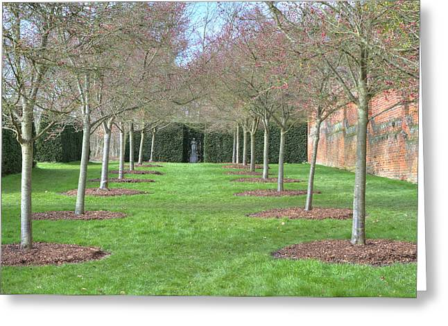 Row Of Trees In An English Countryside Scene Greeting Card by Fizzy Image