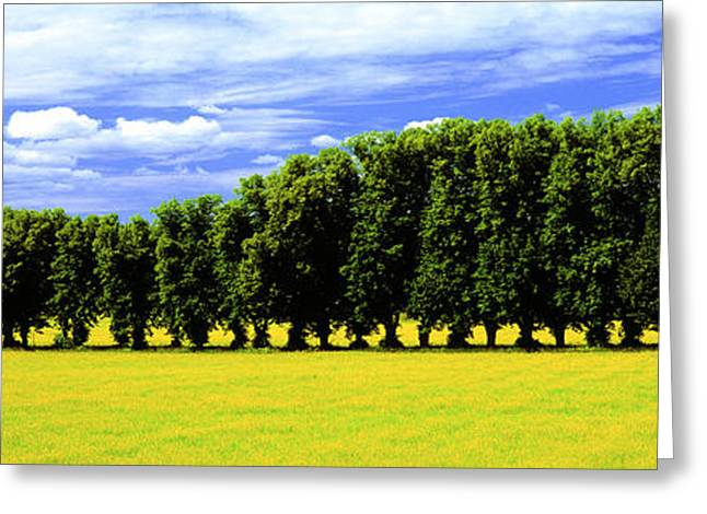 Line Of Trees Greeting Cards - Row Of Trees, Uppland, Sweden Greeting Card by Panoramic Images