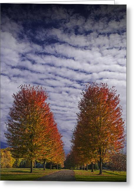 Randy Greeting Cards - Rows of Red Autumn Trees with Cirus Clouds Greeting Card by Randall Nyhof
