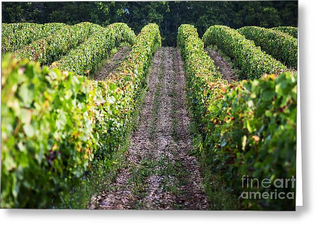 Malbec Photographs Greeting Cards - Rows of Vines Greeting Card by Tony Priestley
