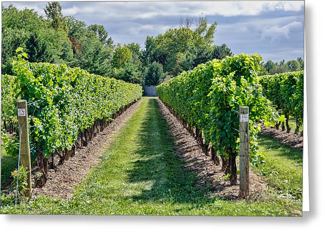 Concord Grapes Greeting Cards - Rows upon rows of grapes Greeting Card by Linda Muir