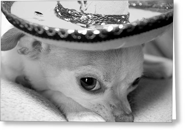 Chihuahua Portraits Greeting Cards - Roxie Greeting Card by Glennis Siverson
