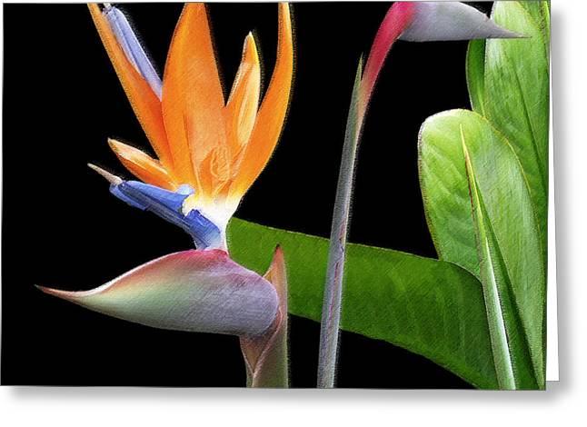 Ben Gertsberg Greeting Cards - Royal Beauty II - Bird Of Paradise Greeting Card by Ben and Raisa Gertsberg