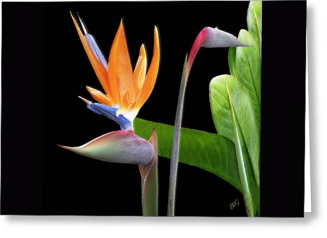 Floral Digital Photographs Greeting Cards - Royal Beauty II - Bird Of Paradise Greeting Card by Ben and Raisa Gertsberg