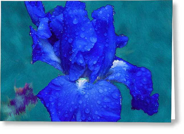 Royal Blue Iris Greeting Card by Viktor Savchenko