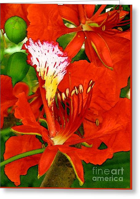 Royal Poinciana Greeting Card by James Temple