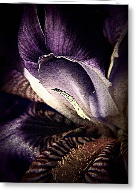 Patterned Marking Greeting Cards - Royal Purple  Greeting Card by Chris Berry