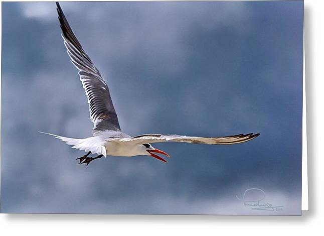 Tern Digital Art Greeting Cards - Royal Tern 1 Greeting Card by Ludwig Keck