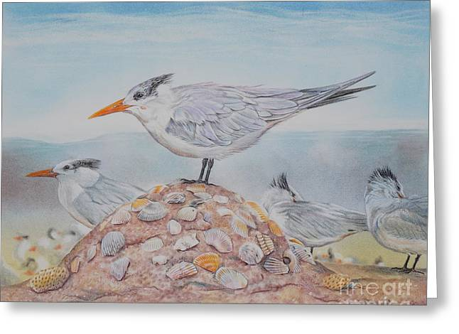 Tern Drawings Greeting Cards - Royal Tern Greeting Card by Gail Dolphin
