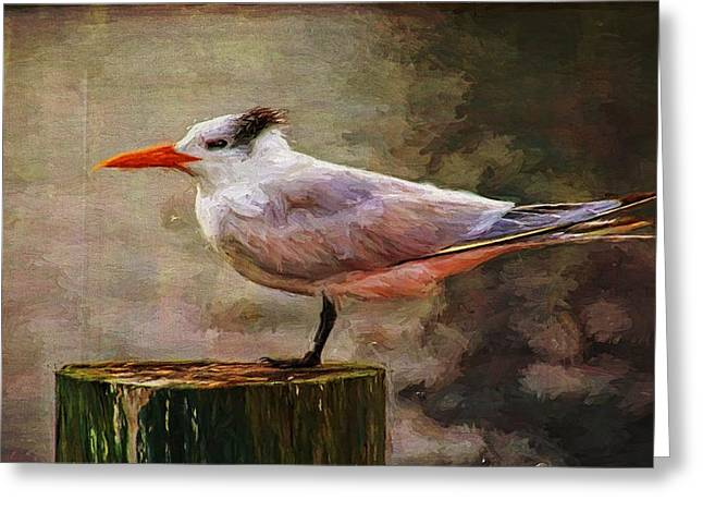 Tern Digital Greeting Cards - Royal Tern Perfect Greeting Card by Alice Gipson
