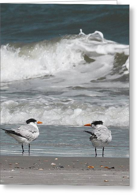 Tern Greeting Cards - Royal Terns 7 Greeting Card by Cathy Lindsey