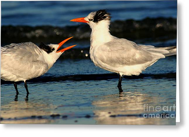 Tern Greeting Cards - Royal Tern Courtship Dance Greeting Card by John Tsumas