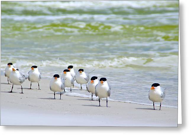 Tern Digital Art Greeting Cards - Royal Terns Greeting Card by Gail Barsh